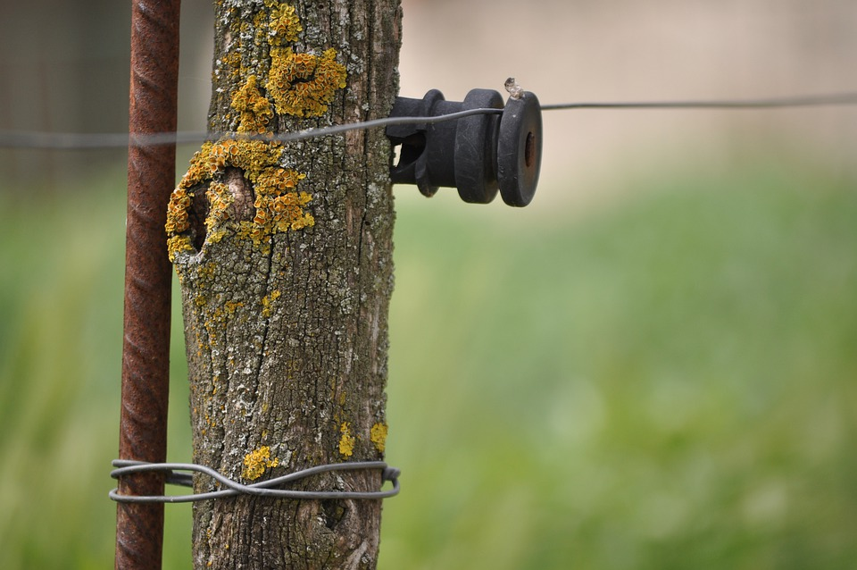 Power Cord, Rustic, Nature