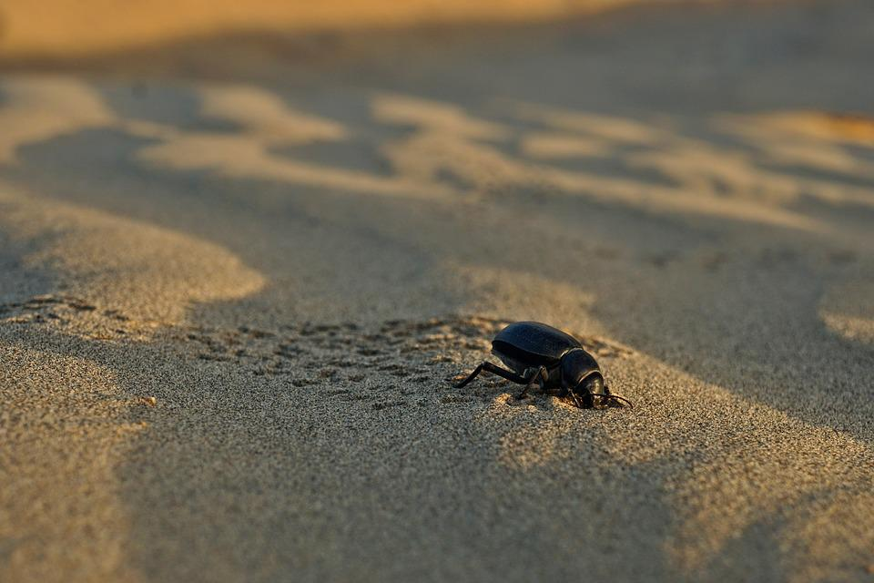 Beetle, Sand, Beach, Desert, Nature