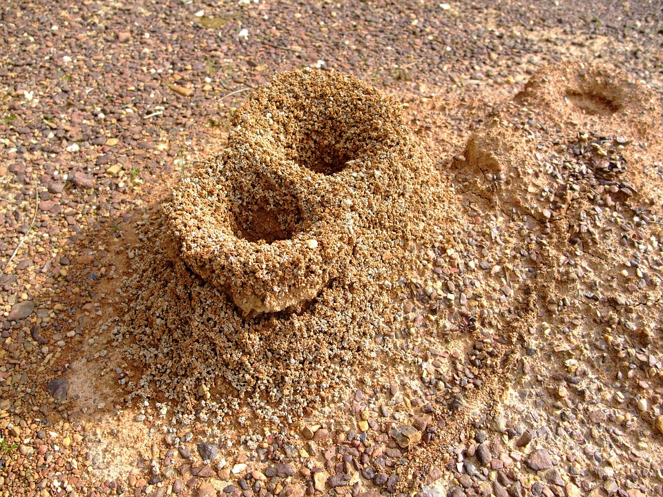 Formicary, Anthill, Ants, Nature, Sand, Hole