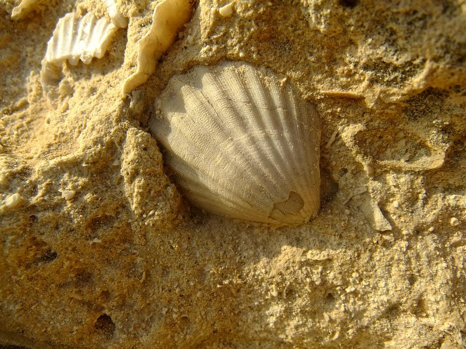 Shell, Sandstone, Yellow, Stone, Sand, Nature, Light