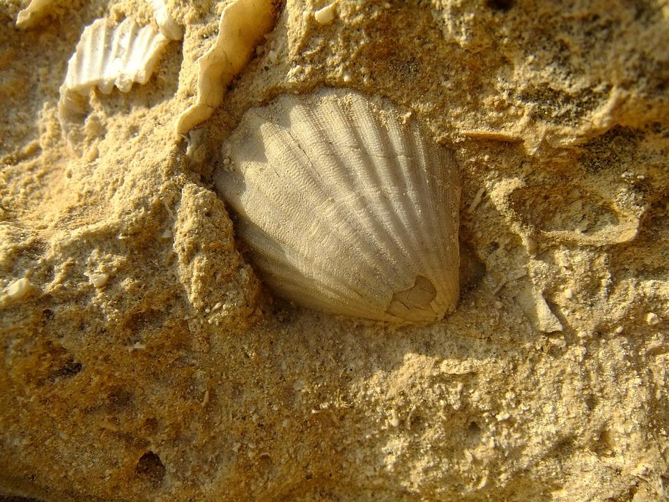 Shell, Sandstone, Yellow, Stone, Sand, Nature, Light