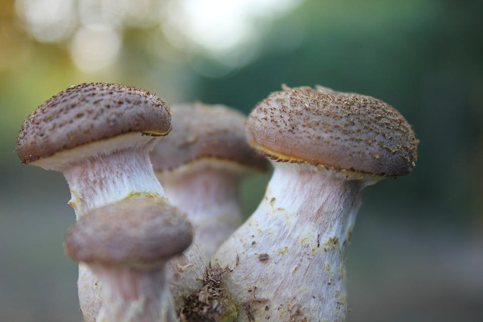 Boletus, Scale, Nature