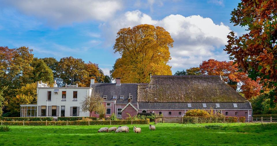 Landscape, Nature, Autumn, Trees, Tree, Scenic, Vote