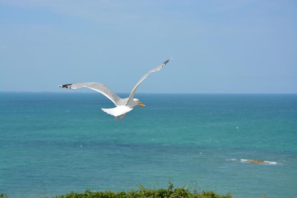 Gull, Seagull, Sea, Nature, Birds, Sky, Beach