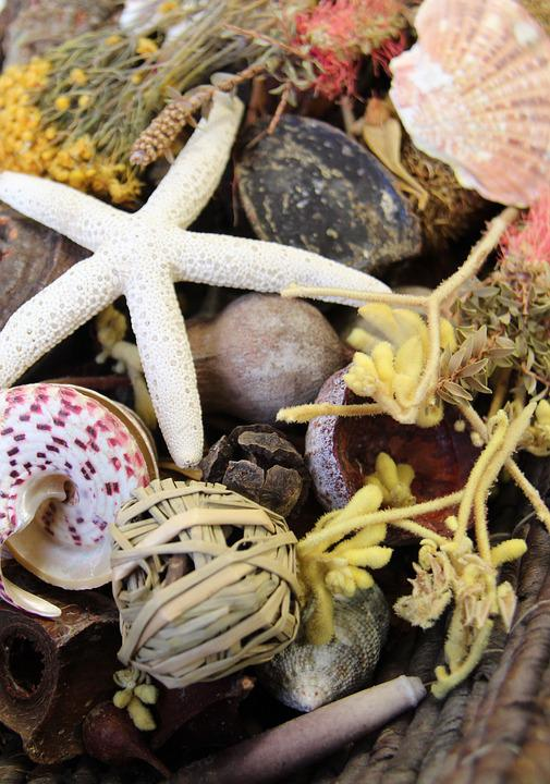Nature, Starfish, Shell, Beach, Sea, Potpourri
