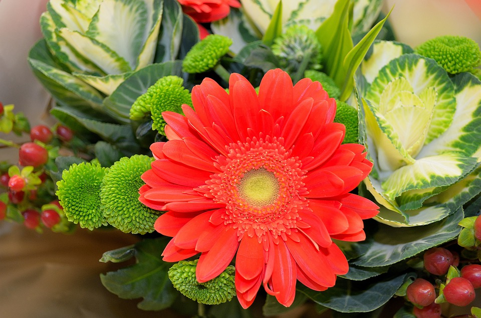 Flowers, Plants, Nature, Macro, Background, Season