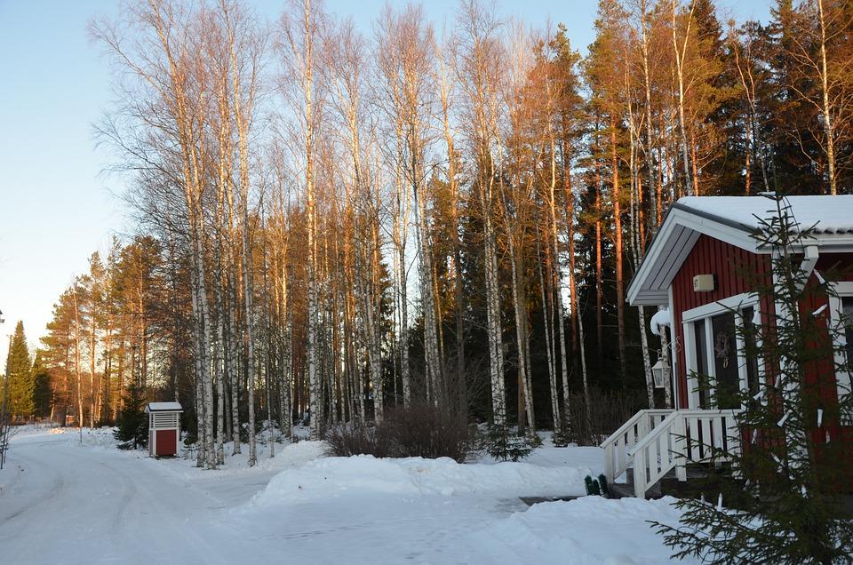 Snow, Winter, Wood, Cold, Season, Frozen, Nature