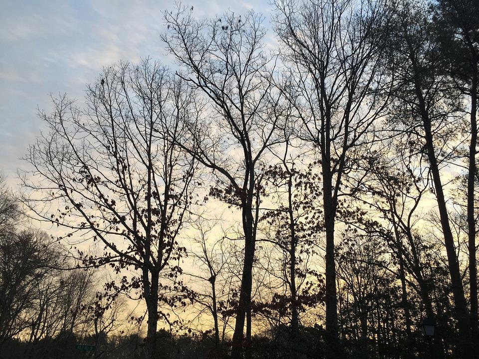 Tree, Nature, Landscape, Wood, Season