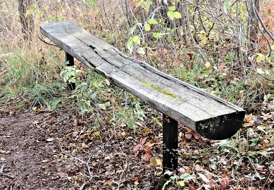 Tree Bench, Seating, Forest, Nature, Autumn Leaves