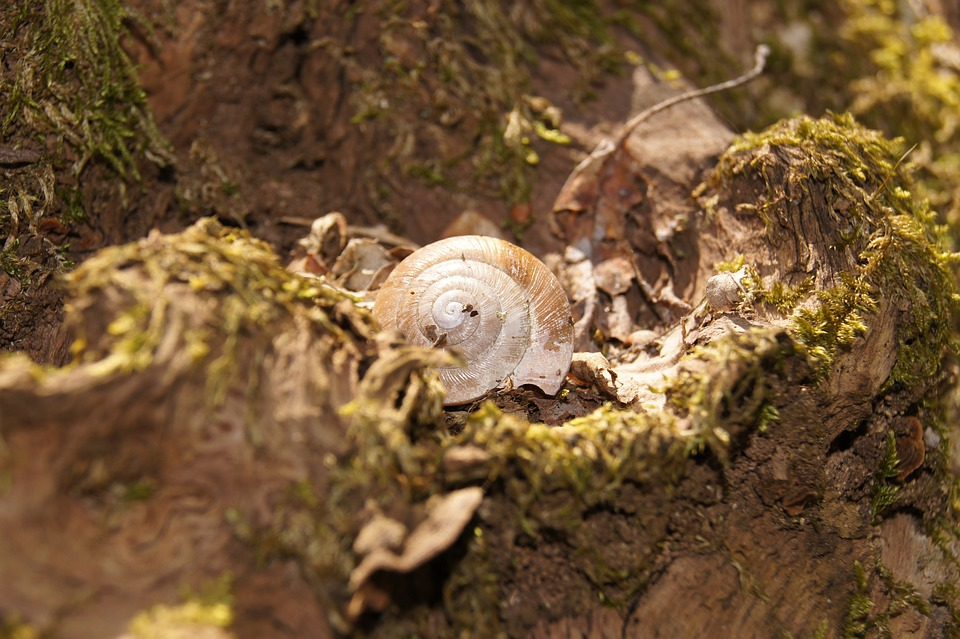 Snail, Shell, Nature