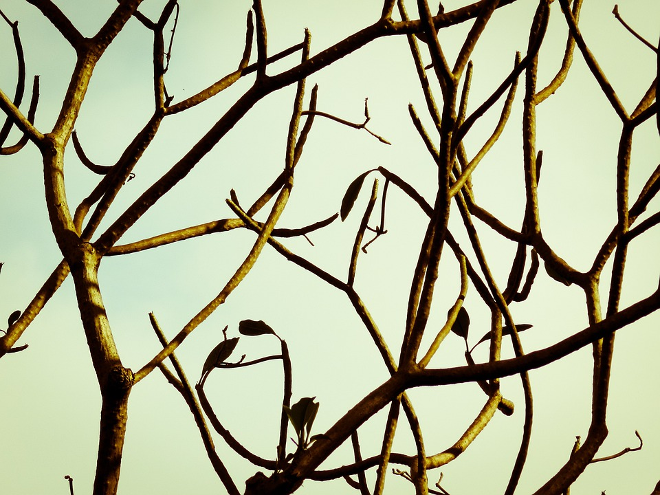 Branch, Tree, Nature, Fall, Silhouette, Sky, Sunset
