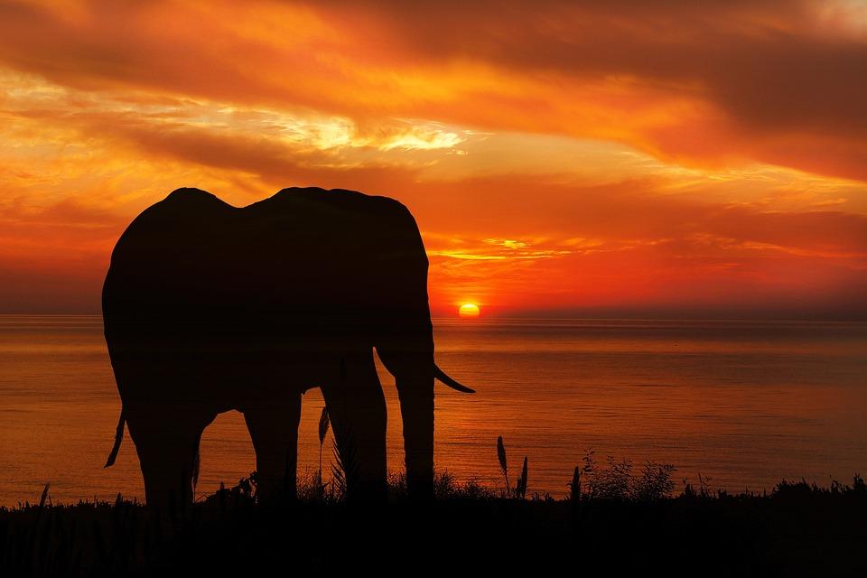 Elephant, Sunset, Silhouette, Nature, Animal, Wildlife