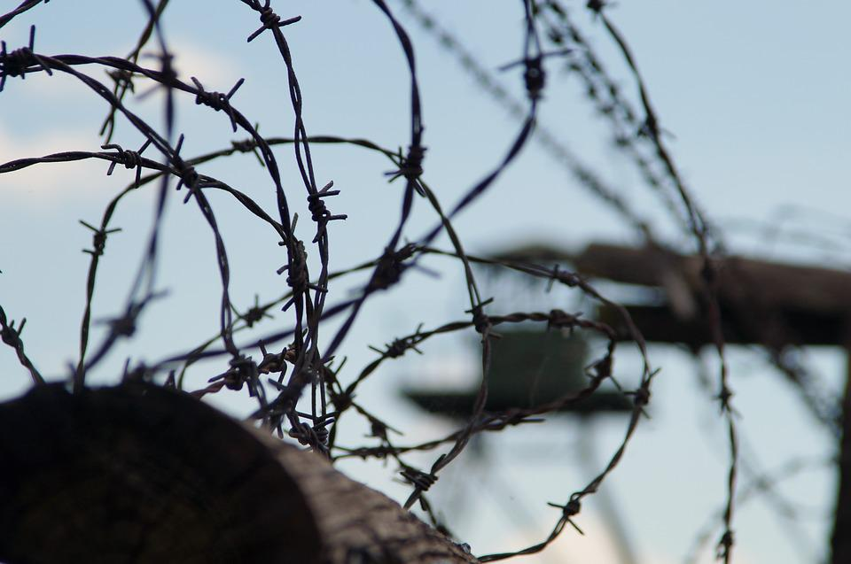 Nature, Tree, Barbed Wire, Outdoors, Sky, Iron Curtain
