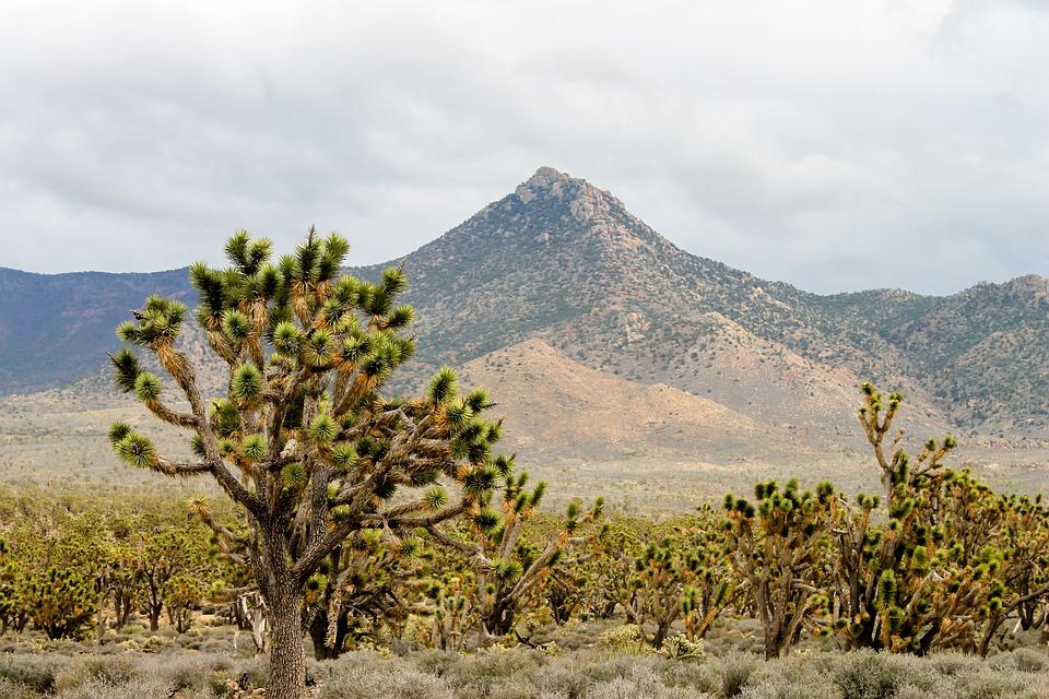Arizona, Desert, Joshua, Landscape, Cactus, Nature, Sky