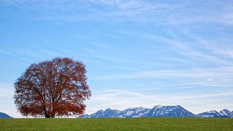 Nature, Landscape, Tree, Panorama, Sky, Alpine, Field