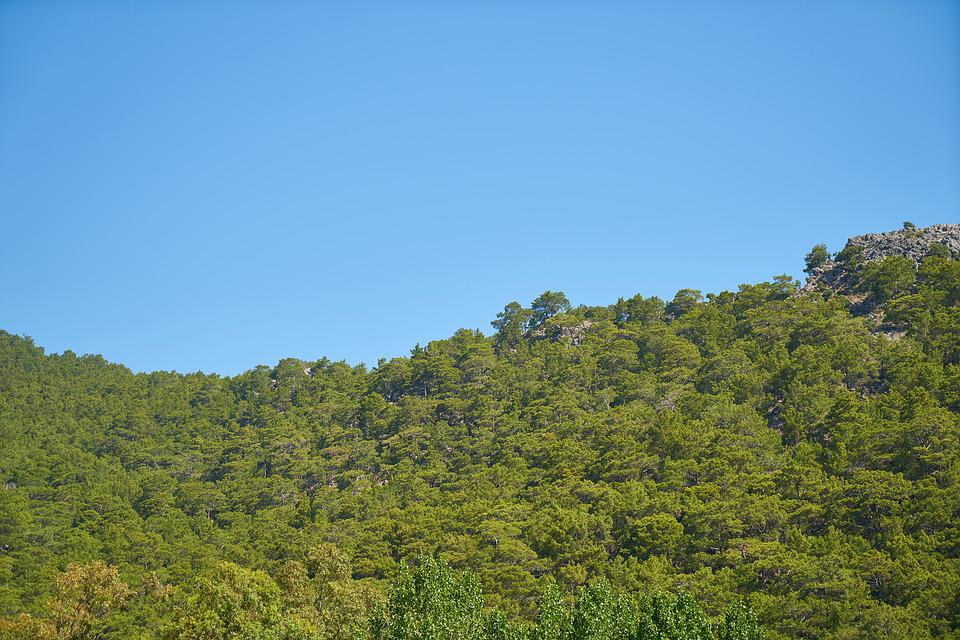 Nature, Panoramic, Tree, Sky, Blue, Forest, Oxygen