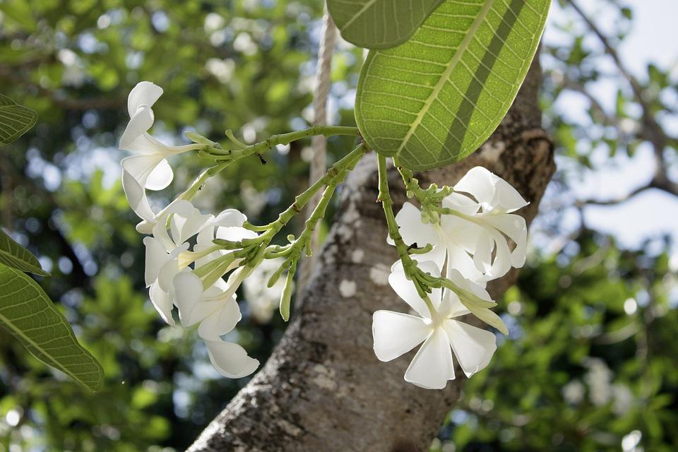Porcelain, Flower, Nature, Sky, Tree