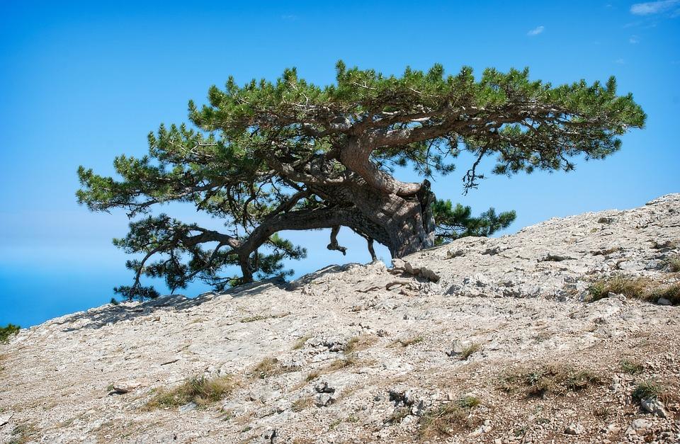 Nature, Landscape, Tree, Sky