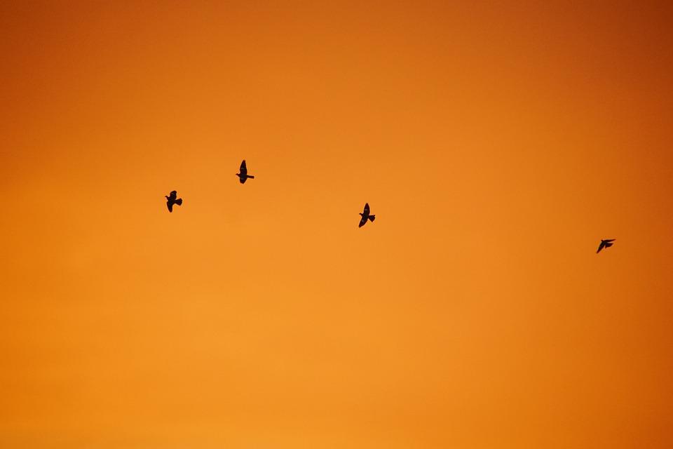 West, Birds, Sky, The Sun, Nature, Twilight, Animals