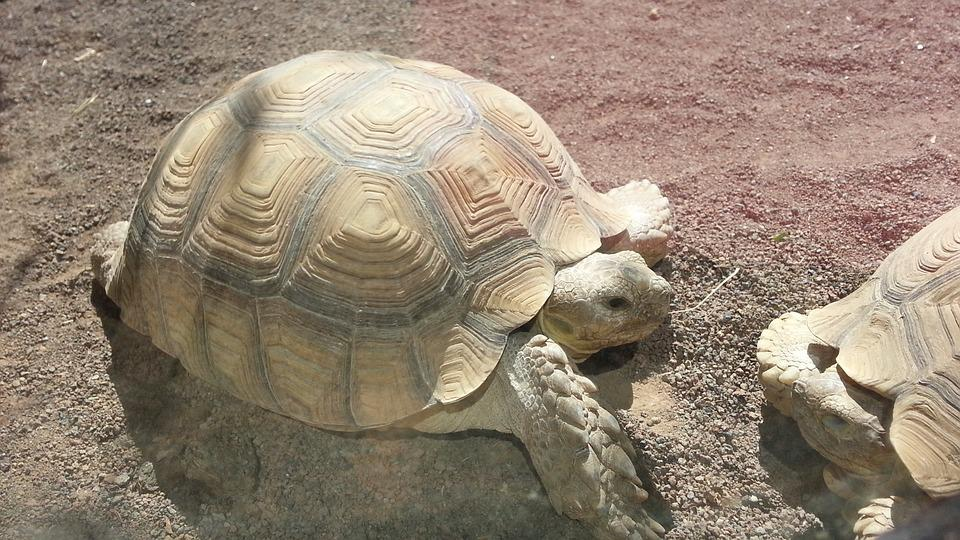 Turtle, Animals, Animal World, Shell, Old, Slow, Nature