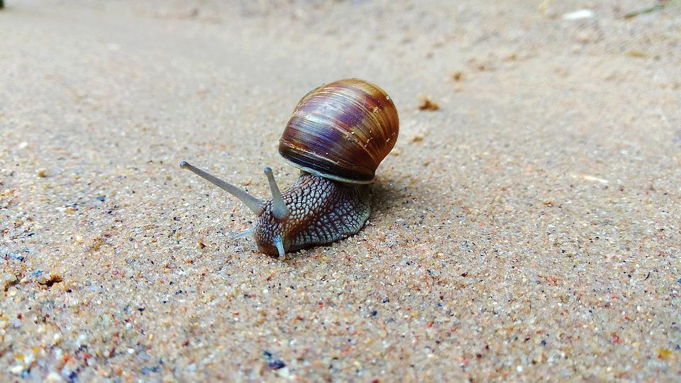 Nature, Animals, Snail