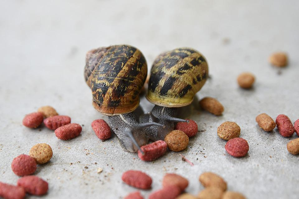 Food, Desktop, Wood, Nature, Snail, Blur, Macro, Slow