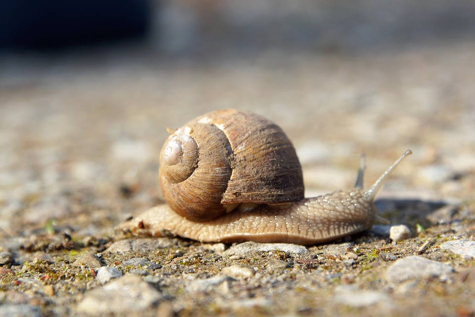 Slowly, Snail, Nature