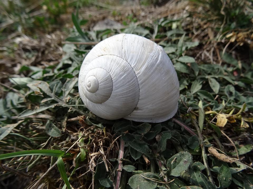 Shell, White, Nature, Snail, Slowly