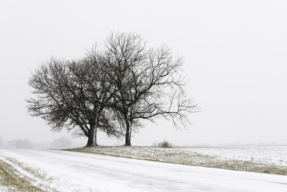 Winter, Landscape, Snow, Nature, Trees, Fog, Frost