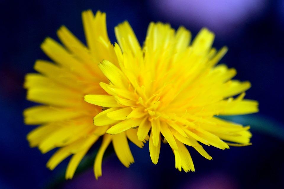 Special, Nature, Macro, Flowers, Plant, Motive, Seasons