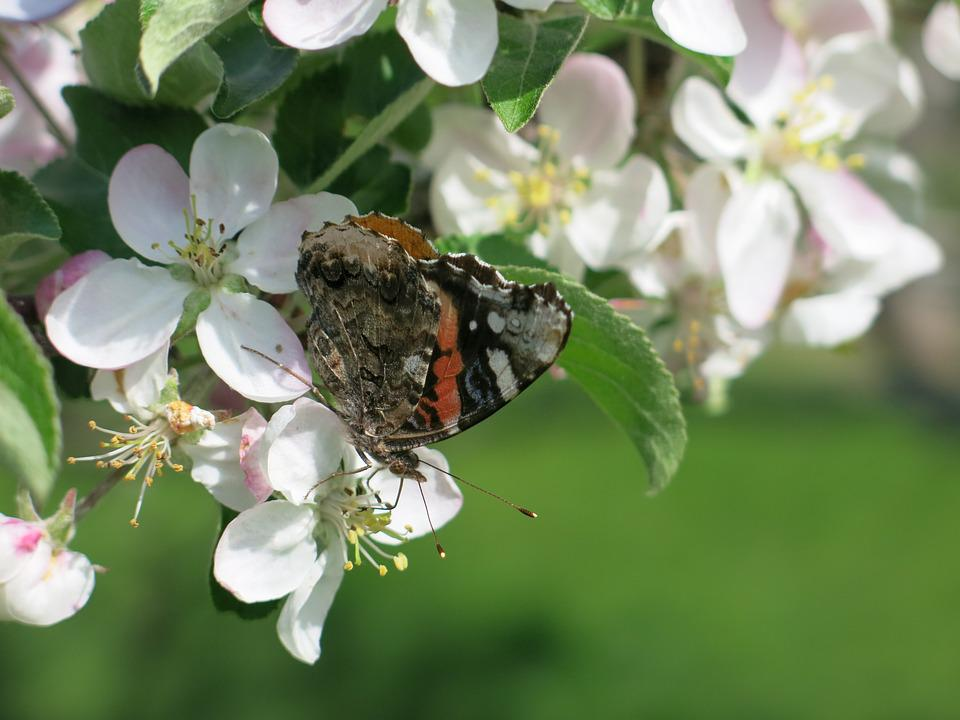 Butterfly, Blossom, Flower, Spring, Nature, Bloom