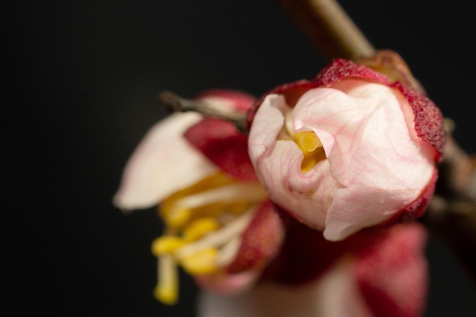 Flowers, Petals, Bloom, Blooming, Spring, Flora, Nature