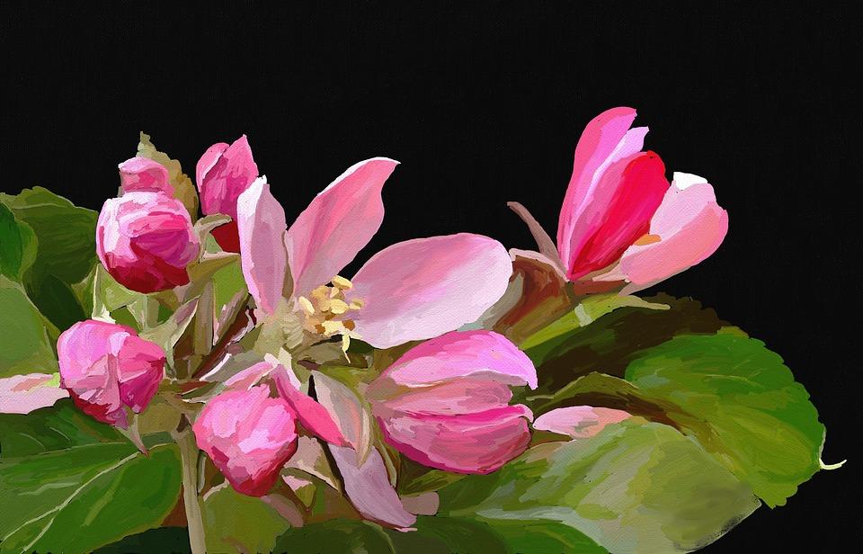 Magnolia, Flower, Spring, Blossom, Bloom, Pink, Nature