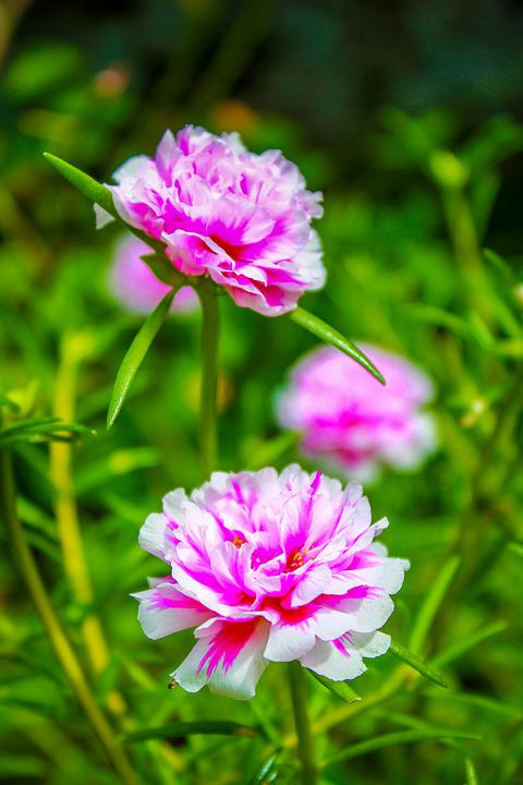 Spring, Nature, Blossom, Flora, Bloom, Plant, Garden