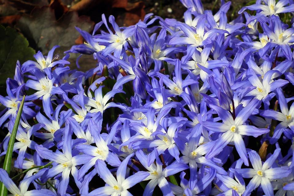 Flower, Nature, Plant, Floral, Garden, Spring, Blooming