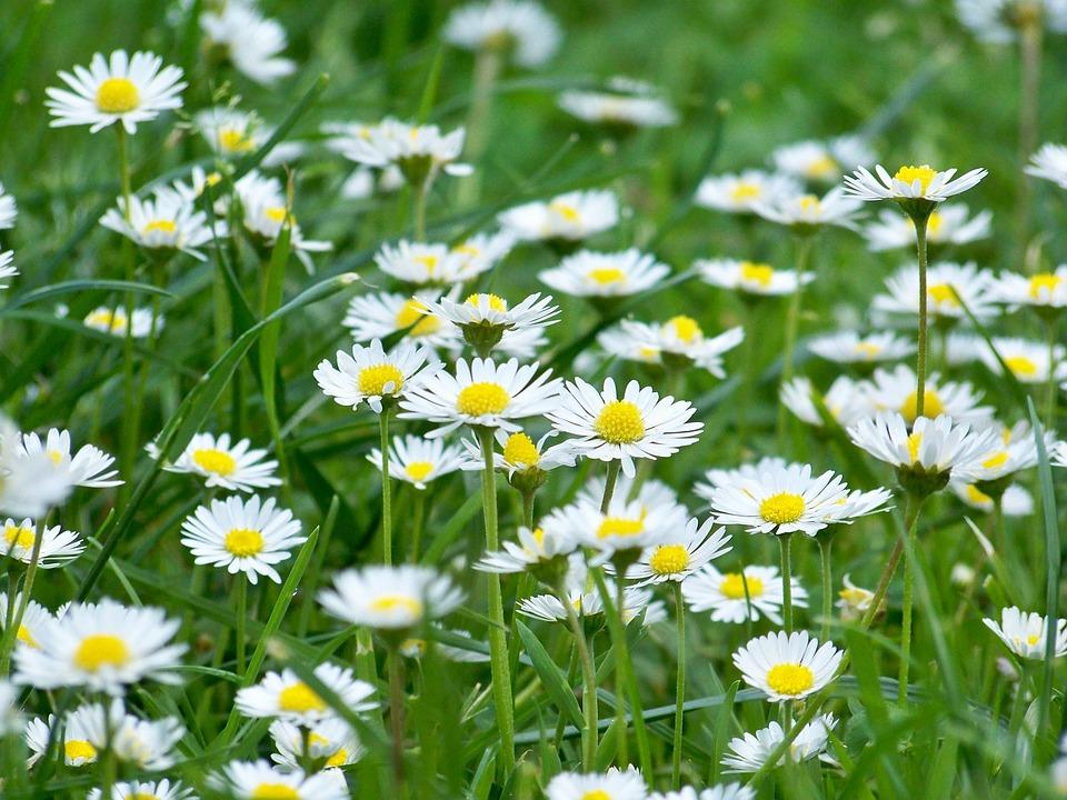 Meadow, Grass, Nature, Plant, Landscape, Flower, Spring