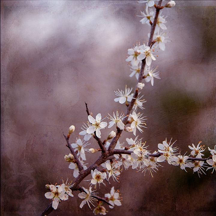 Flower, Nature, Spring, Plant, Bloom, Blossom, Petals