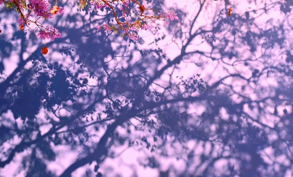 Nature, Spring, Tree, Flowers, Bloom, Blossom