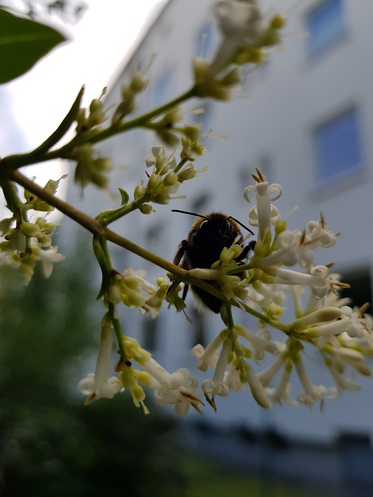 Bee, Flower, White, Garden, Spring, Insect, Nature