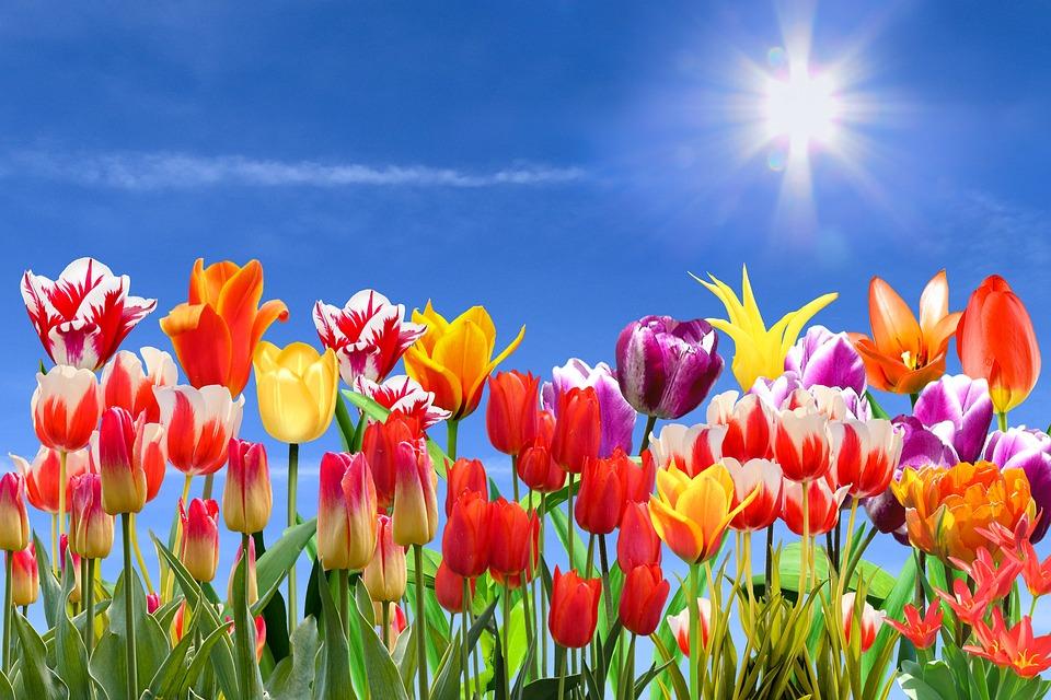 Nature, Landscape, Spring, Flowers, Sky, Sun, Tulips