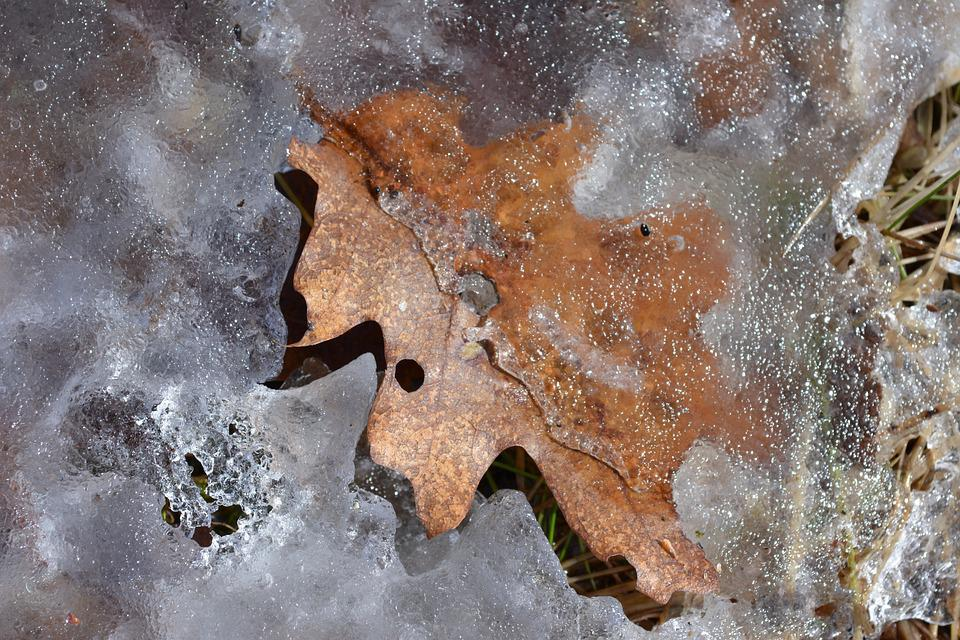 Leaf, Spring, Ice, Nature