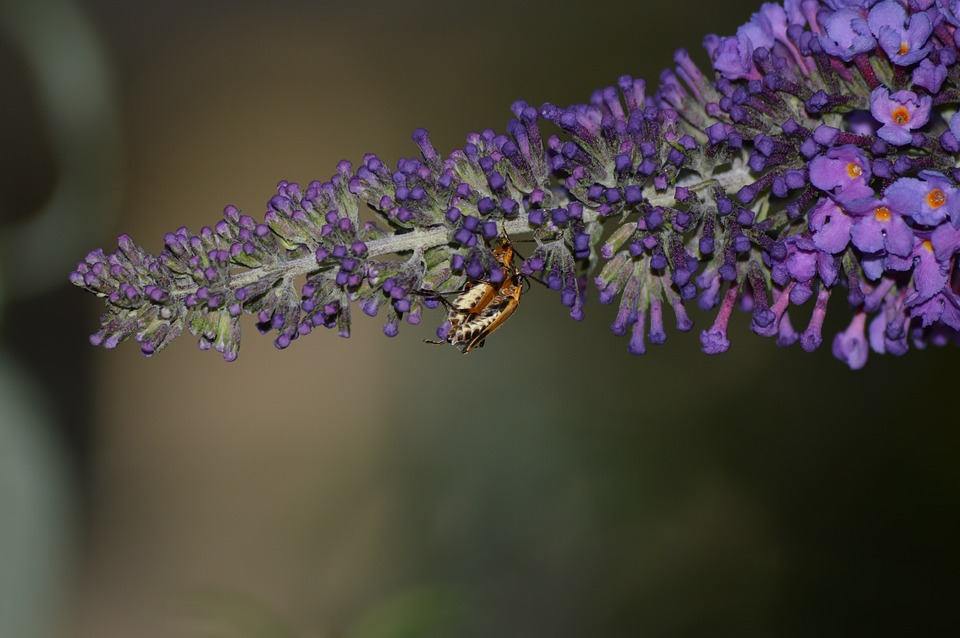Mating, Season, Closeup, Animal, Nature, Spring