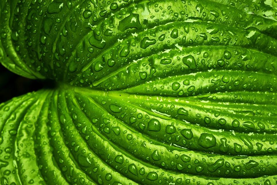 Leaf, Rain, Spring, Nature, Green, Plant, Natural