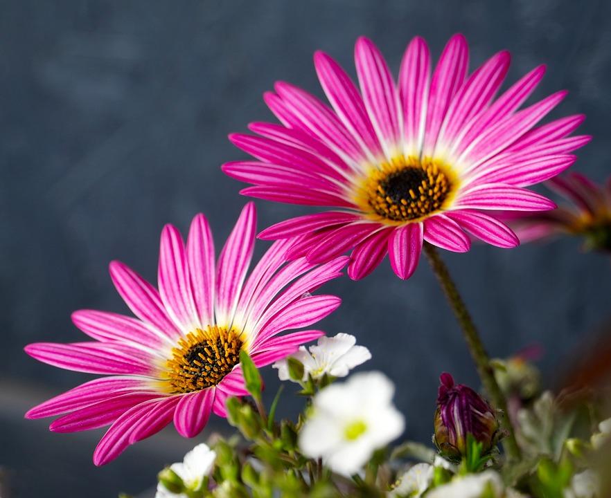 Flowers, Pink, Spring, Nature, Flora, Blossom, Bloom