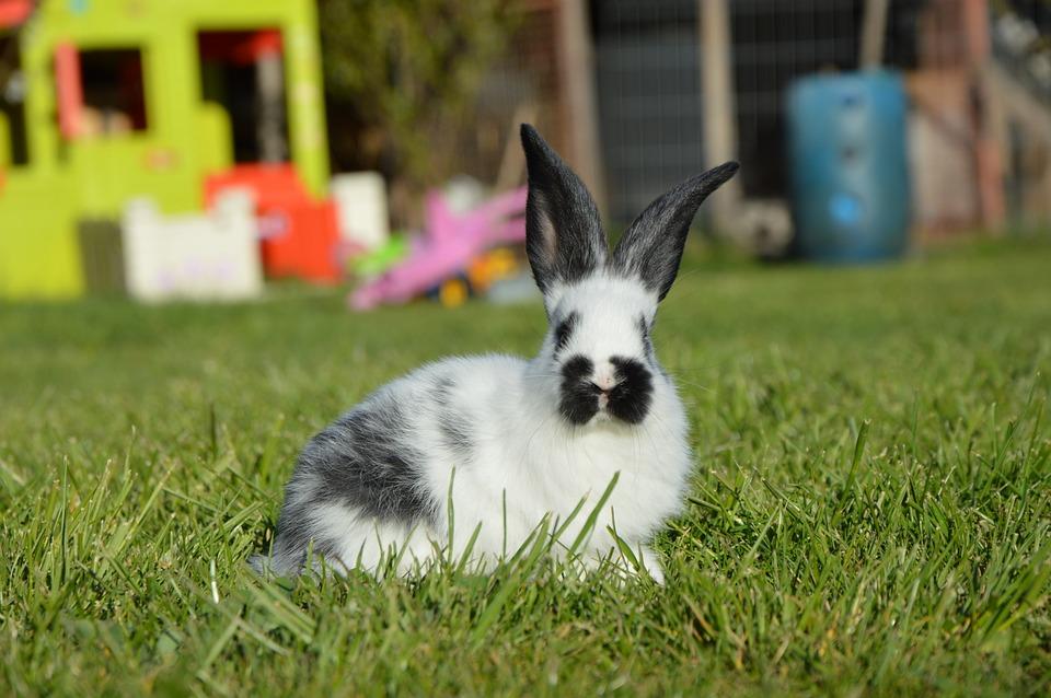 Rabbit, Nature, Spring
