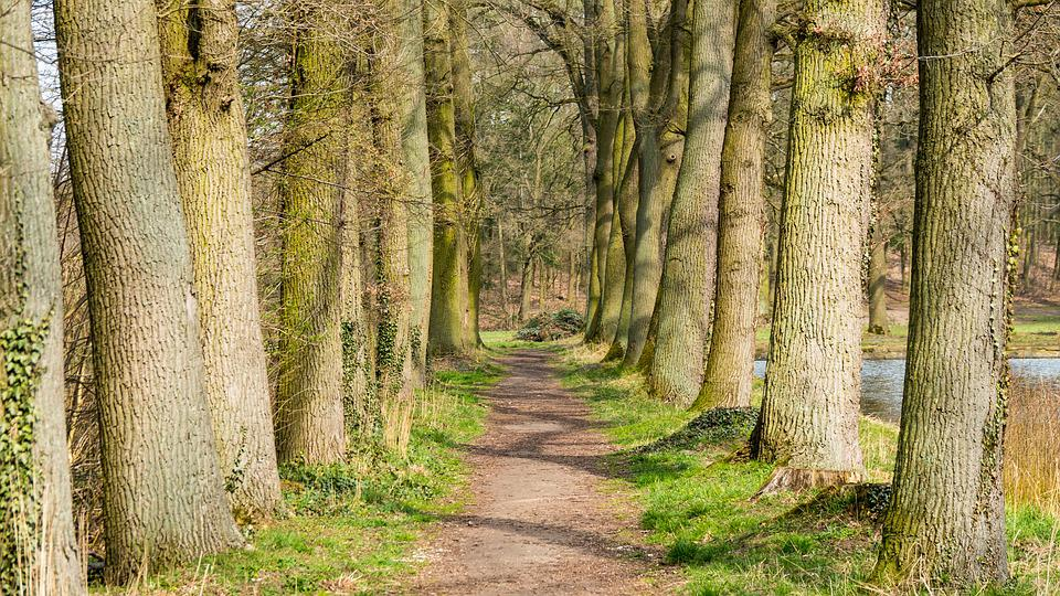 Tree, Avenue, Spring, Path, Forest, Nature, Trees