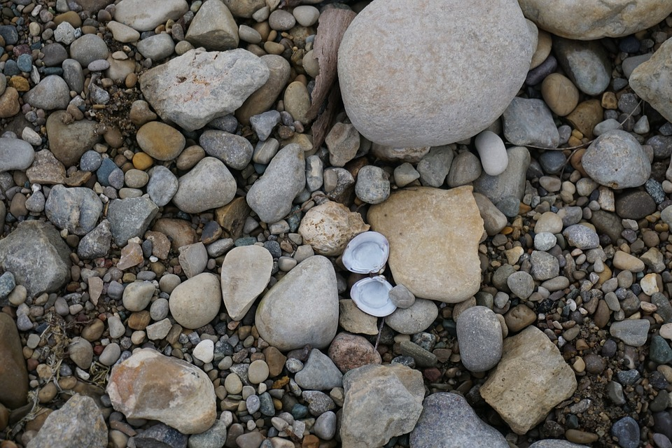Rocks, Shell, Lake, Nature, Stone, Sand, Beach, Summer