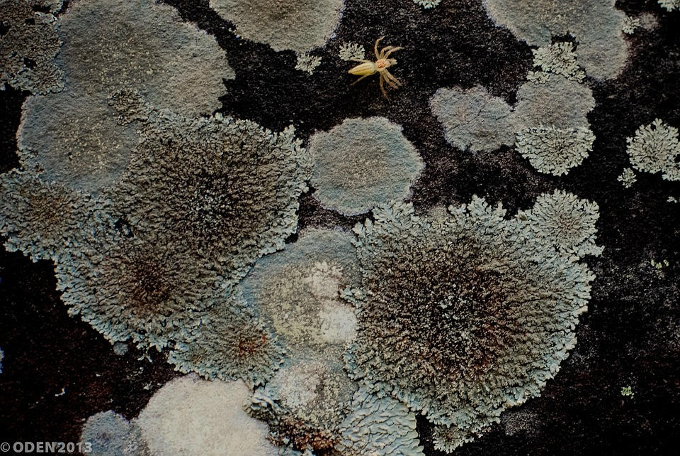 Lichen, Rock, Moisture, Moss, Stone, Nature, Plant
