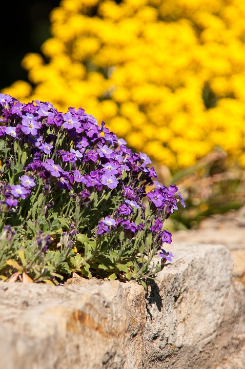 Wall, Flowers, Ground Cover, Stone Wall, Nature