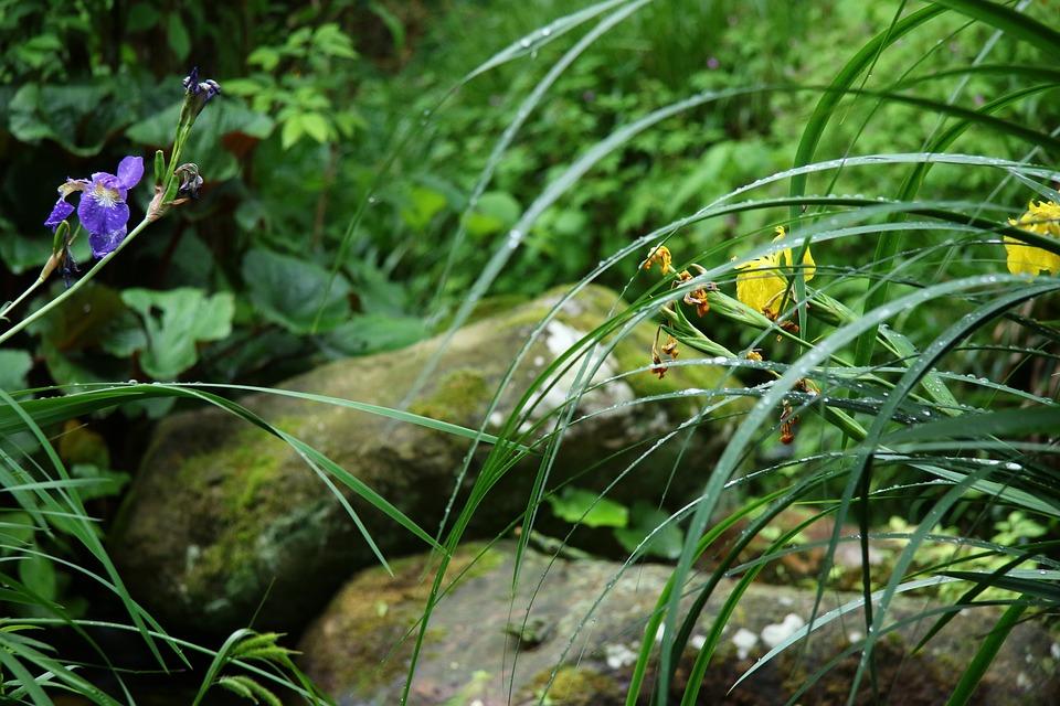 Garden, Pond, Nature, Water, Plant, Garden Pond, Stones